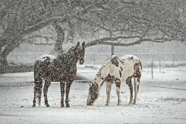 How to stay warm when caring for horses this winter